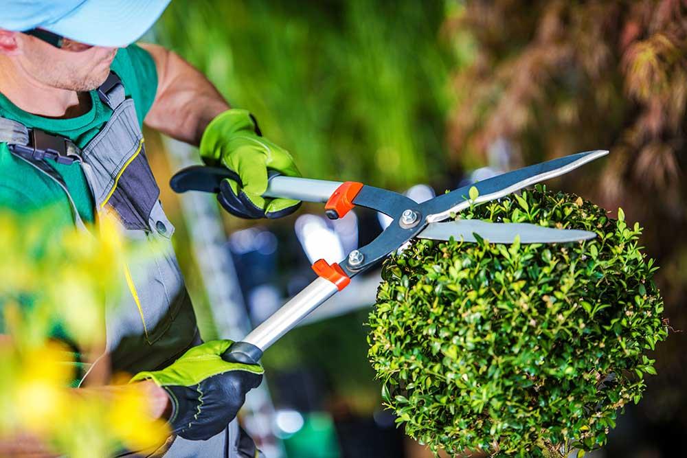 Busch schneiden im Garten
